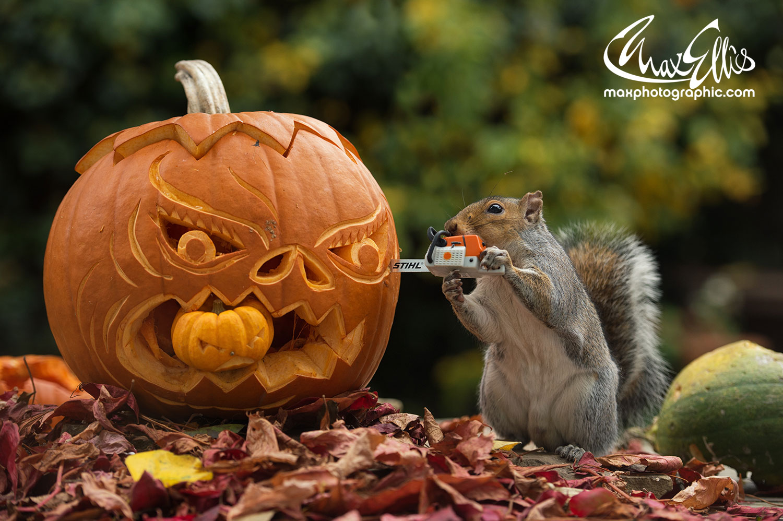 Squirrels | Max Ellis Photography