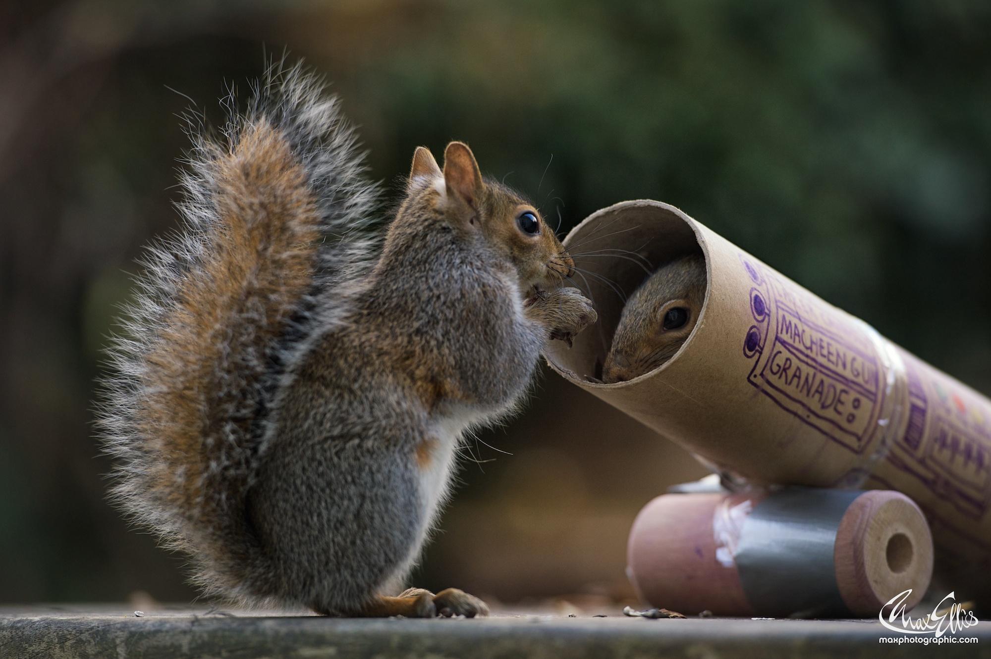 Beautiful Squirrels of Photographer Max Ellis #artpeople